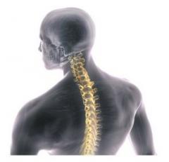 Spine Navigation